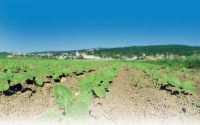 Día internacional de los suelos